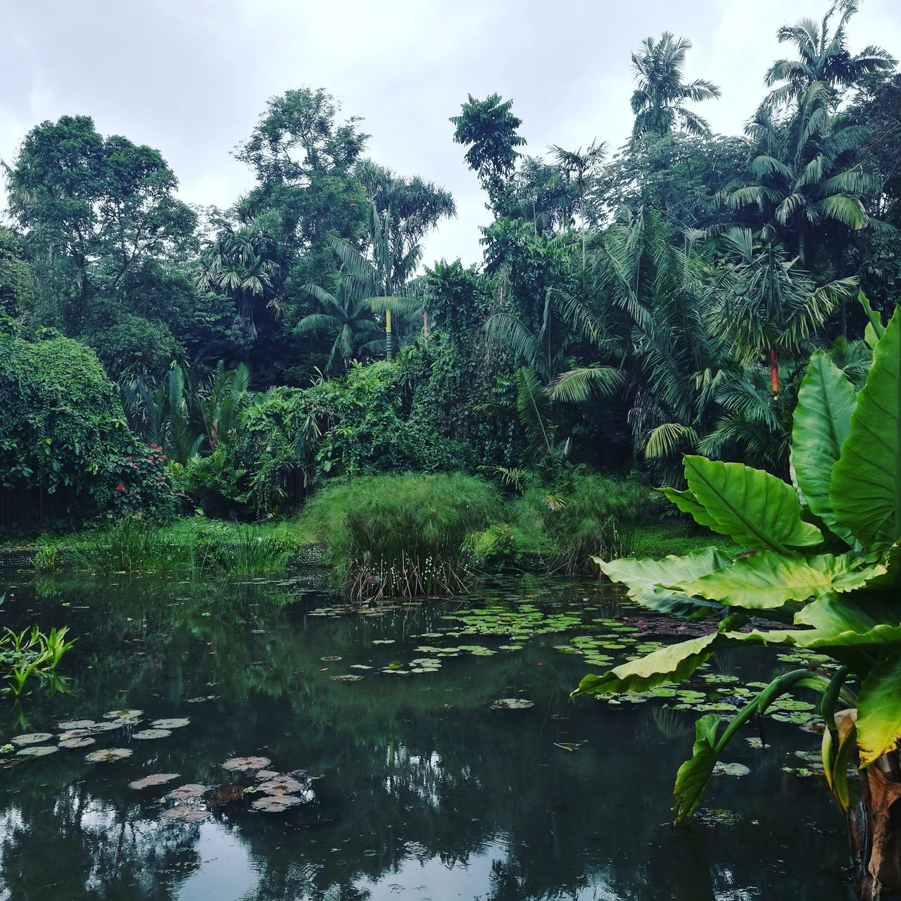 Nature Green Color No People Plant Outdoors Beauty In Nature Day Water Tree Reflection Sky Growth Scenics Jungle Trip Zen Travel Naturelovers INDONESIA