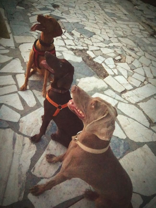 Outdoors Domestic Animals Dogsfamily Treat Time Playtime Lykavittos Hill Athens, Greece