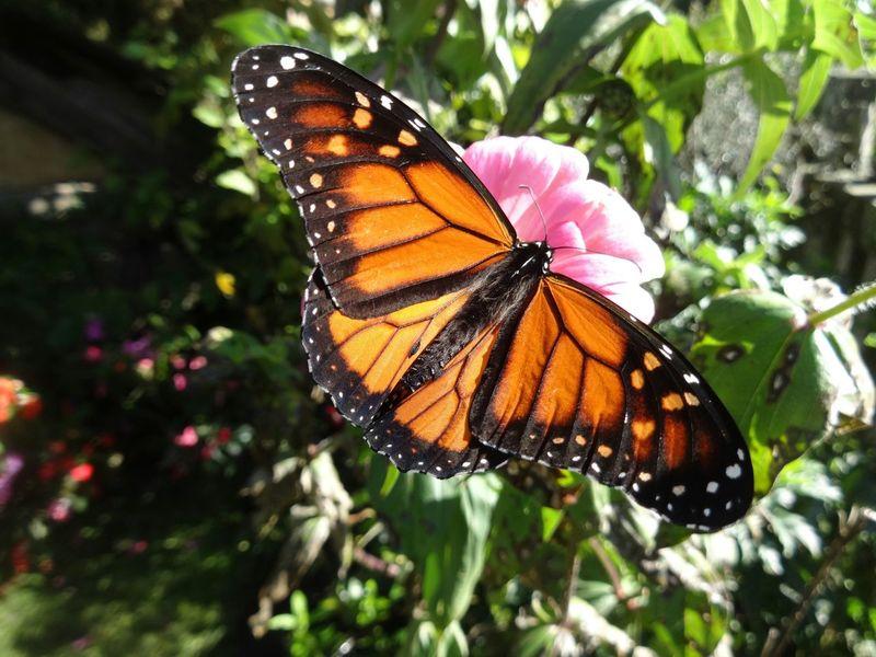 Matamata Hobbiton Betterfly Lordofthering New Zealand Beauty Nature Insect Photography Holidays Taking Photos Dream