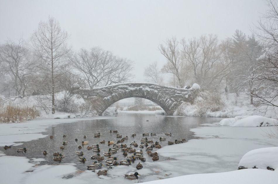 Beautiful stock photos of enten, Animal Themes, Animal Wildlife, Animals In The Wild, Arch
