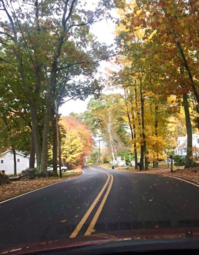 New England. Tree Road Car Nature Outdoors Beauty In Nature Scenics First Eyeem Photo