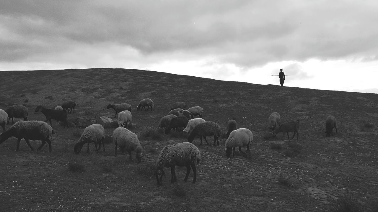Shepherd Sheep Spring Nature Beauty Beauty In Nature Nature Beauty Only Men Relaxing Landscape Nature View Simple Beauty Simple Life Simple Moment Blackandwhite Black And White Black & White P9photography P9 Free Free Life Alone Lonely Work Job Turkmensahra Turkmen Golestan Iran Iran