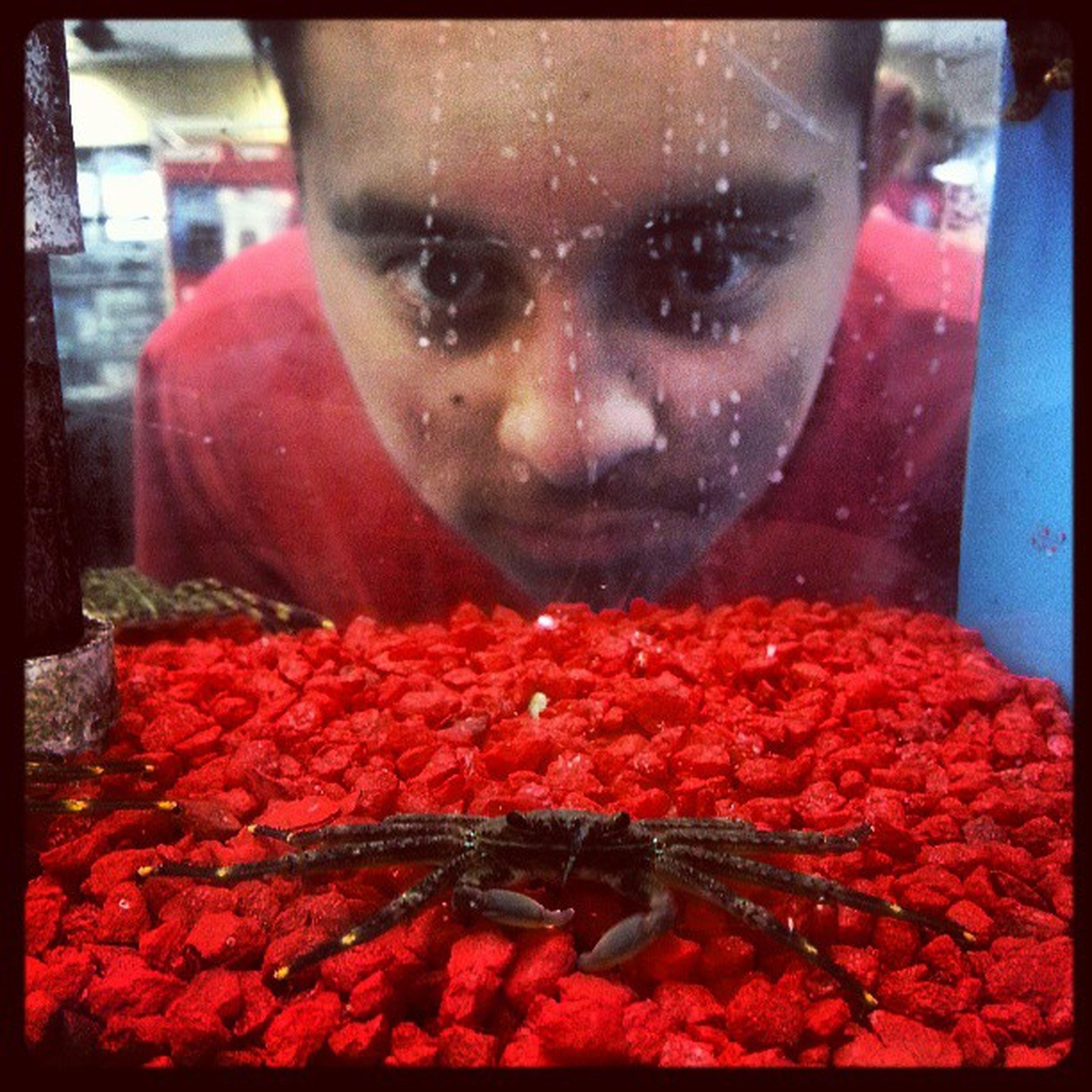 Emilio looking at a Sallylightfoot Crab. Aquarium Fish Crab Oceanlife Austin atx igersaustin igerstexas