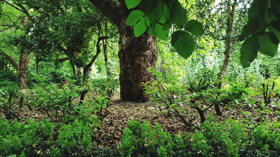 Beautiful stock photos of st patricks day, Beauty In Nature, Day, Forest, Green Color