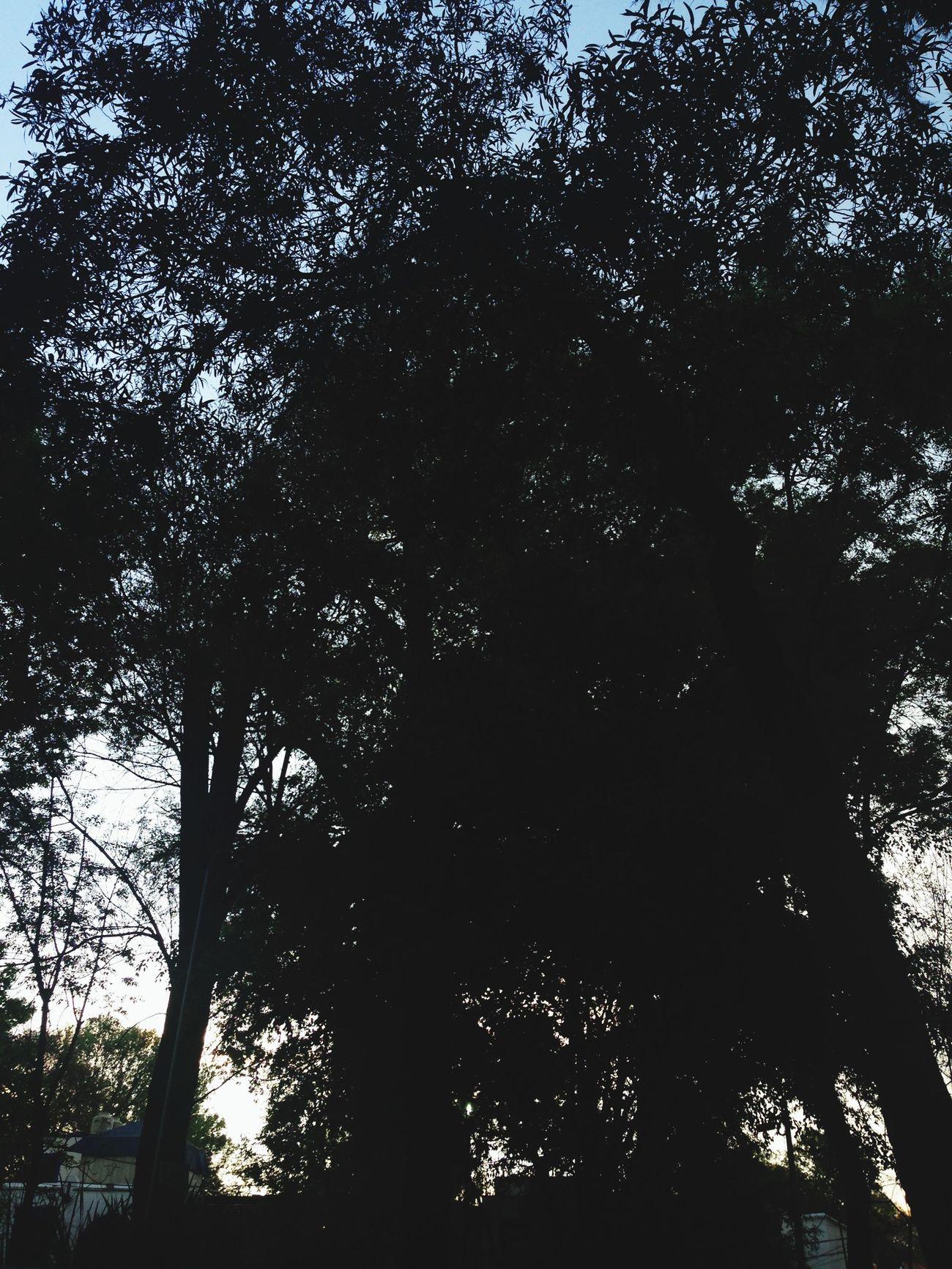 Los árboles; ¡cosa mas maravillosa! Y tan poderosa.