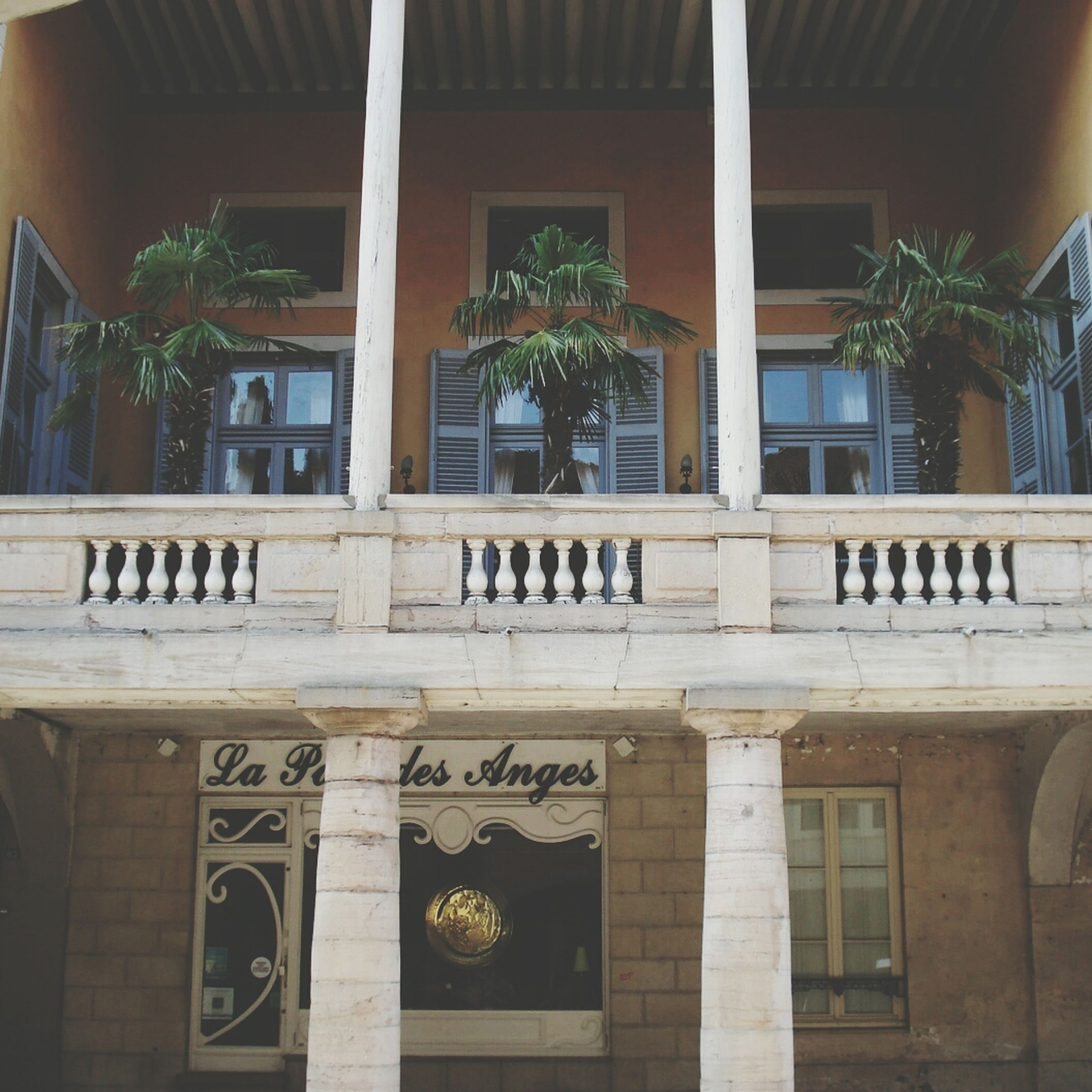 architecture, built structure, building exterior, window, text, tree, western script, building, potted plant, house, no people, day, facade, residential building, outdoors, entrance, low angle view, palm tree, plant, growth