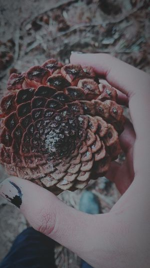 G e o m e t r y Human Hand Close-up Holding Nature Guatemala Day Wooden Texture Wood - Material