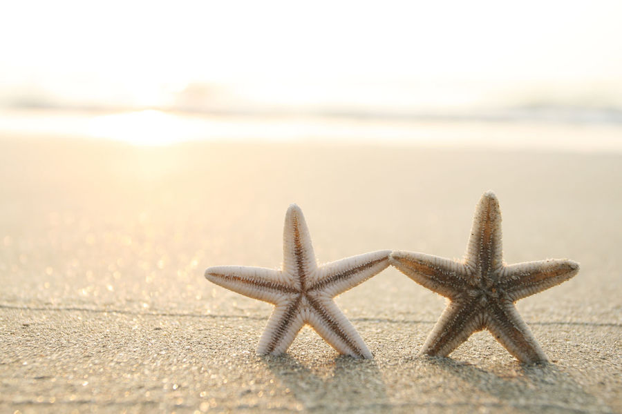 Picture of starfish on the beach in the sand Animal Themes Animal Wildlife Beach Beauty In Nature Close-up Coastline Day Nature No People Outdoors Refraction Sand Sea Sea Life Seashell Sky Star Shape Starfish  Sunbeam Sunlight UnderSea Vacations Water