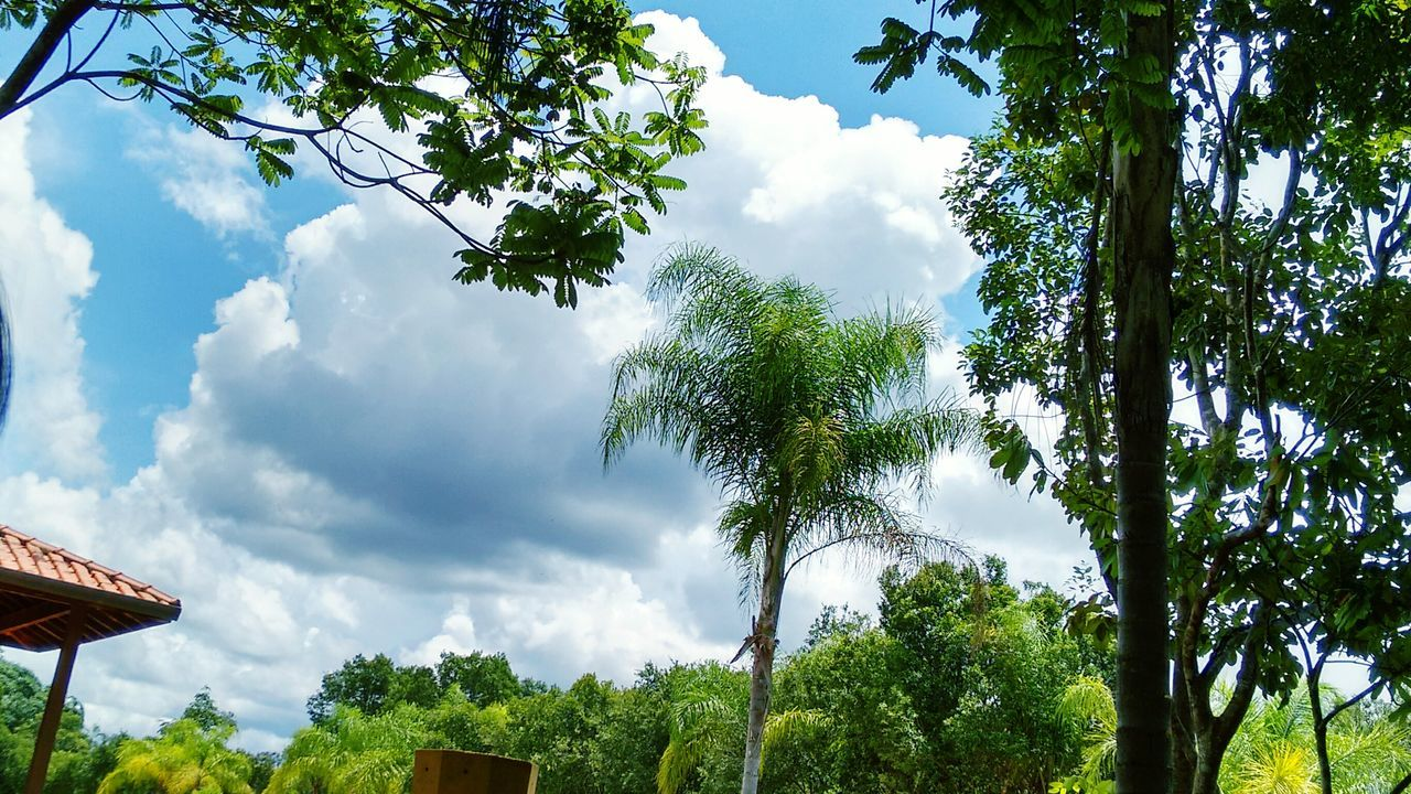 tree, sky, low angle view, cloud - sky, growth, day, branch, outdoors, nature, no people, leaf, green color, beauty in nature, architecture