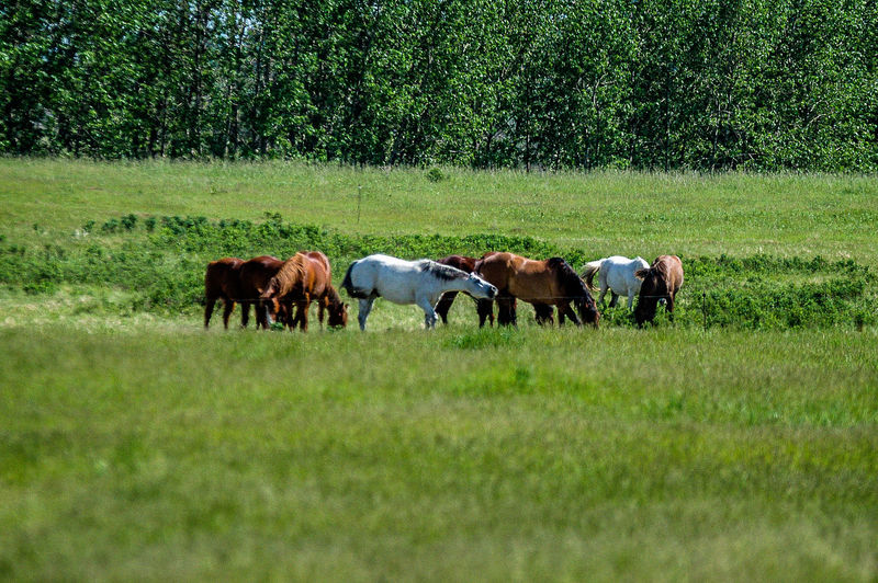 Horses Animal Themes Beauty In Nature Cow Day Domestic Animals Field Grass Grazing Green Color Growth Landscape Livestock Mammal Nature No People Outdoors Rangeland Togetherness Tranquility Tree