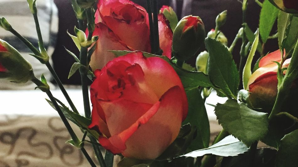 Rose - Flower Growth Red Nature Beauty In Nature Close-up Freshness Leaf Plant No People Fragility Day Outdoors Flower Head