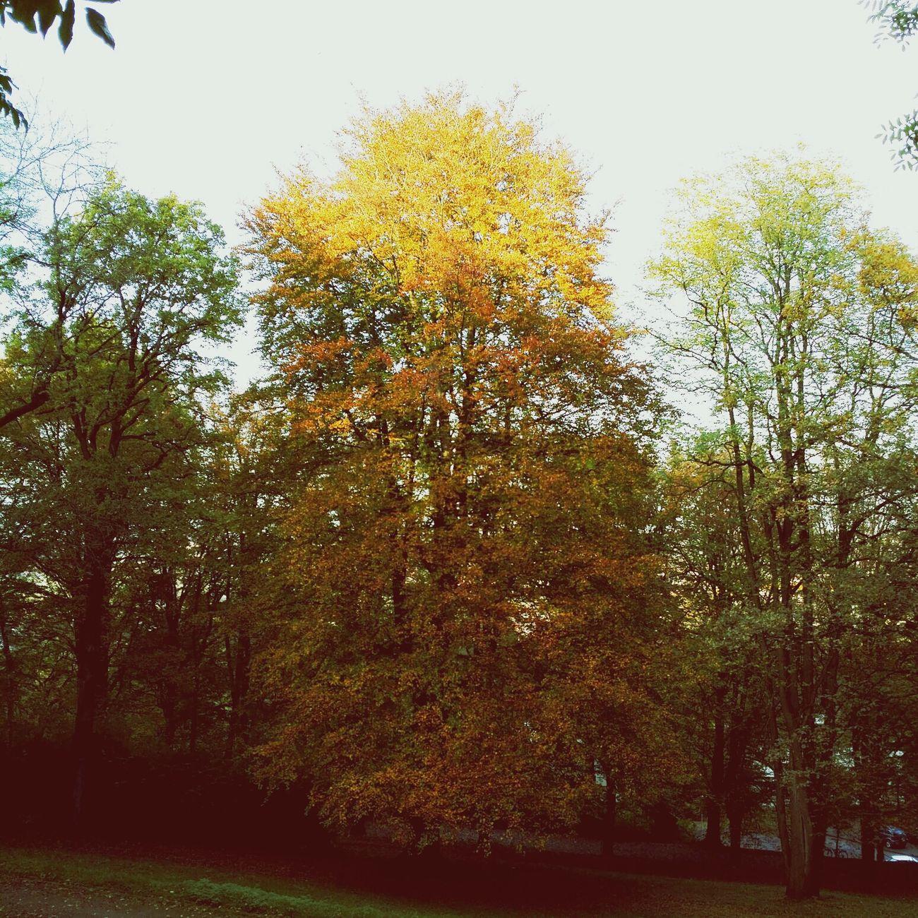 Aachen Herbst Autumn