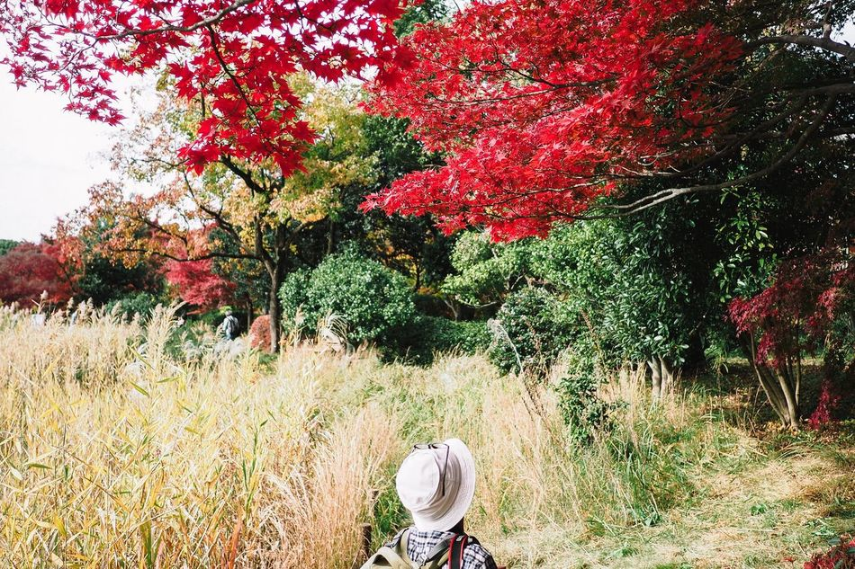 Chance Encounters One Person Streetphotography Nature Tree Outdoors Beauty In Nature Japanese  Japan Tokyo Garden Tree Autumn Autumn Colors Autumn Leaves