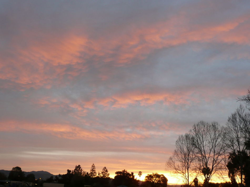 sunset with orange streaks bover silhouetted trees in San Jose Beauty In Nature Cloud - Sky Clouds And Sky Day Dusk Sky Environment Growth Landscapes Meteorology Nature No People Opalescent Outdoors Park Scenics Silhouette Sky Steaks Sunset Tranquility Travel Photography Tree Treetop Twilight Sky Winter