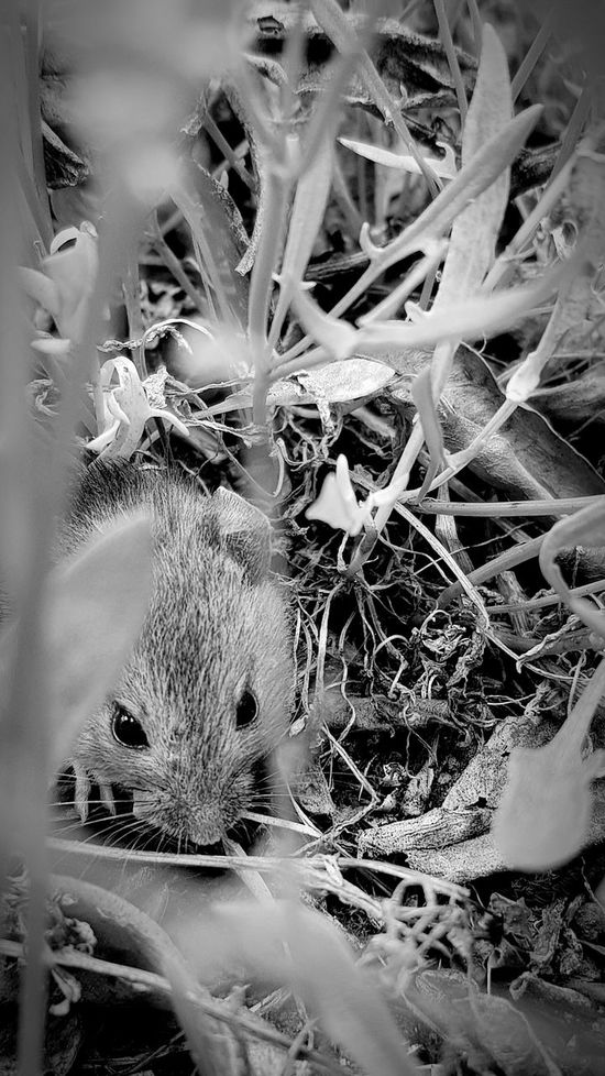 One Animal Green Color Animals In The Wild Nature Animal Themes Animal Wildlife Plant No People Day Reptile Close-up Outdoors Beauty In Nature Wildlife_perfection Wildlife Photography, Nature Photography Wild Life Photograph Wild Life Photography Wildlife & Nature Close Up Photography Mammal Wildlife Conservation Animals In The Wild Wild Life Photography Beauty In Nature The Great Outdoors - 2017 EyeEm Awards Black And White Photography Black And White Friday