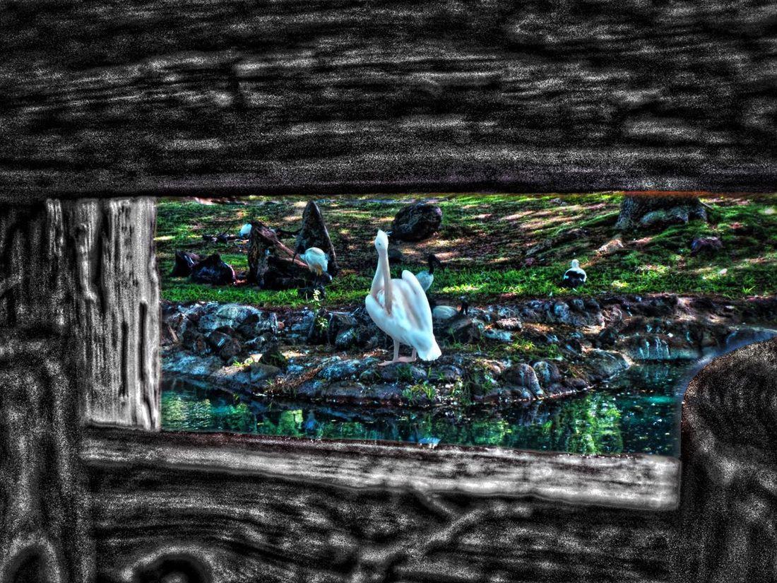 Zoo Blackandwhite Chaperone