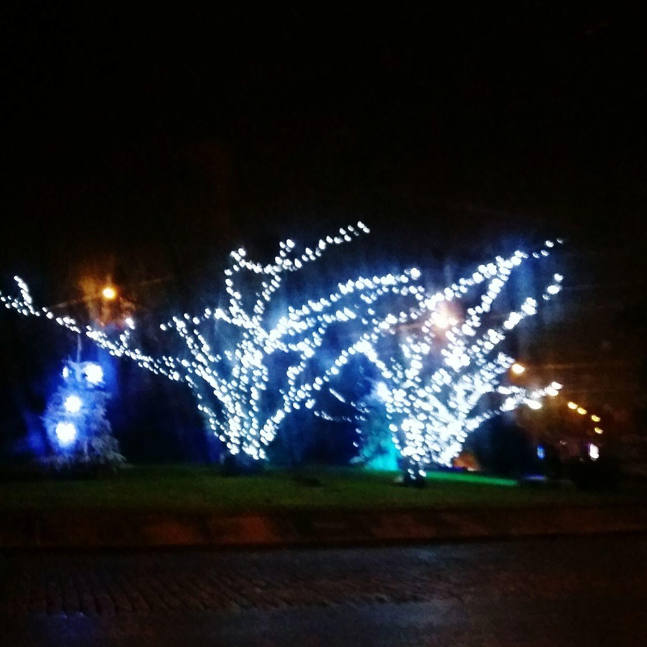 Illuminated Night Celebration Christmas Decoration Outdoors No People Exterieurs Christmas Christmas Tree Arbres Tree Treeoflight Noël Weinachten Weinachtslicht