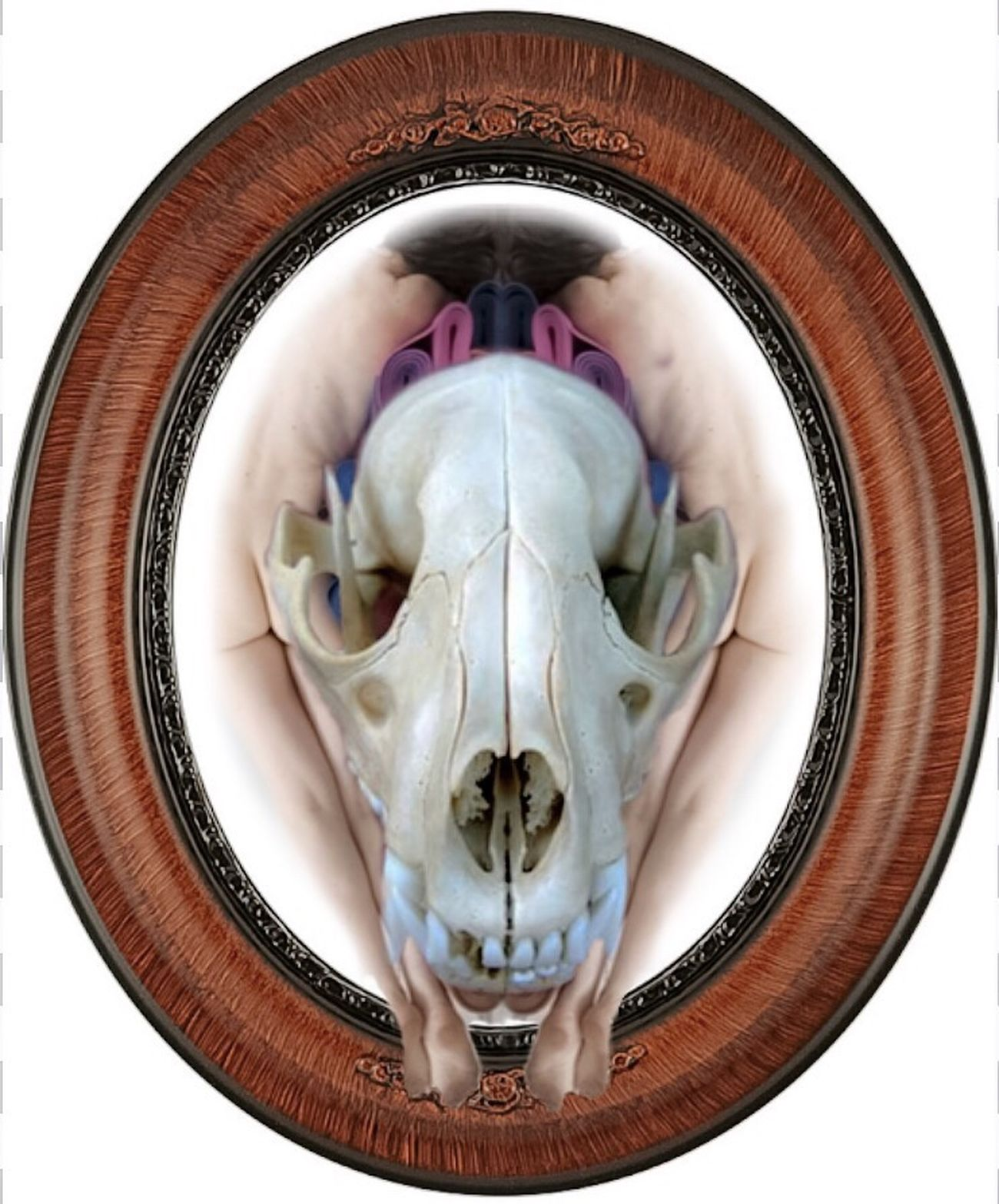 Devolution Photographic Approximation Human Condition Facial Experiments Is Anything Out There Real? Forgotten Dreams New Nightmares Splinters Of Reality