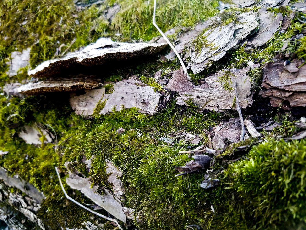 Growth Nature No People Outdoors Tree Day Plant Beauty In Nature Green Color Close-up Bark Of A Tree Minnesota Paynesville Crow River Nature Park Nature Park  Springtime Spring March Moss Mossy Mushrooms Fungus Fallen Tree Overgrown Forest