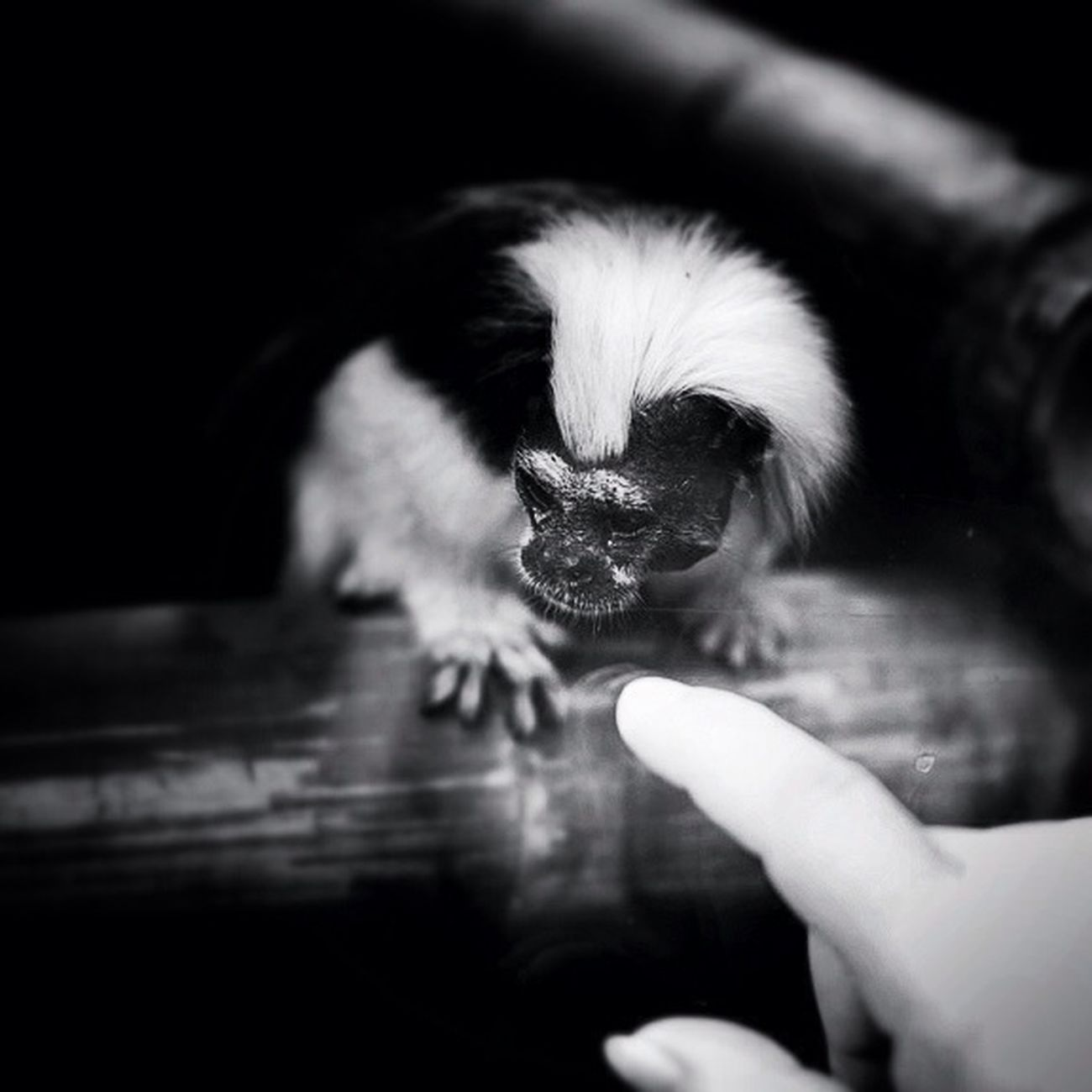 Monkey Nature Blackandwhite Animals