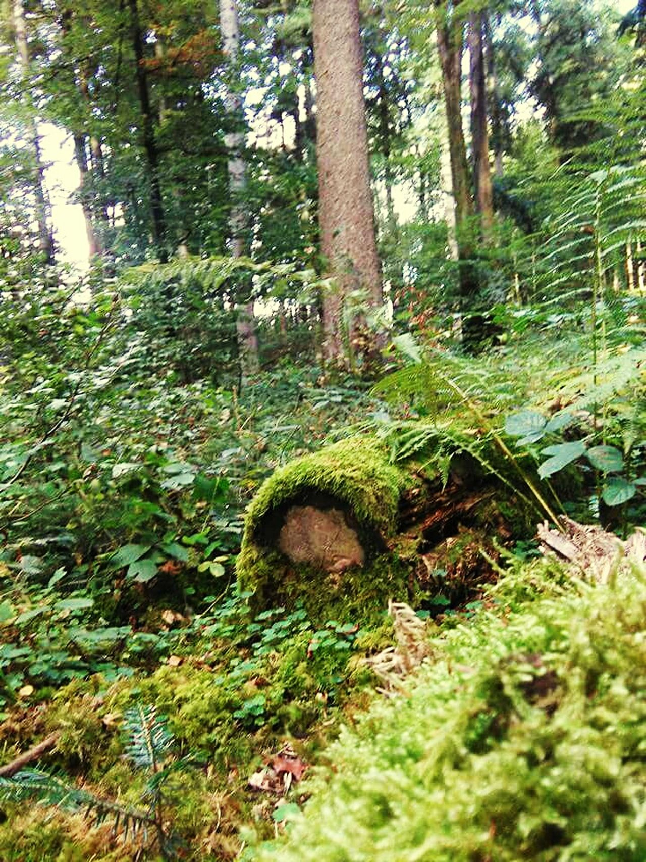 Wood Trees Trees And Bushes Moss Fallen Tree