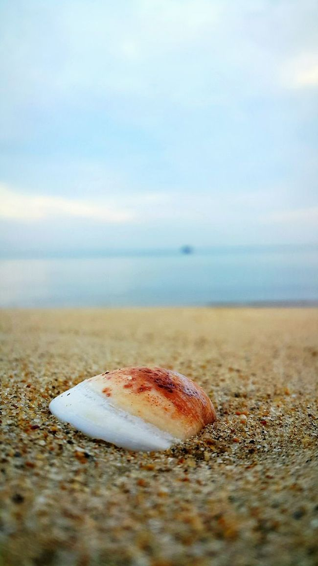 Seashell Shootermag Shore Tioman Abect Tekek Pahang Malaysia Beach Beach Time Beach Photography Beach Walk Beachlovers Beachfront Beachscape Beachtime Beachwalk SandyBeach Sandy Ground Relaxation Relax❤️ Man Mansbestfriend