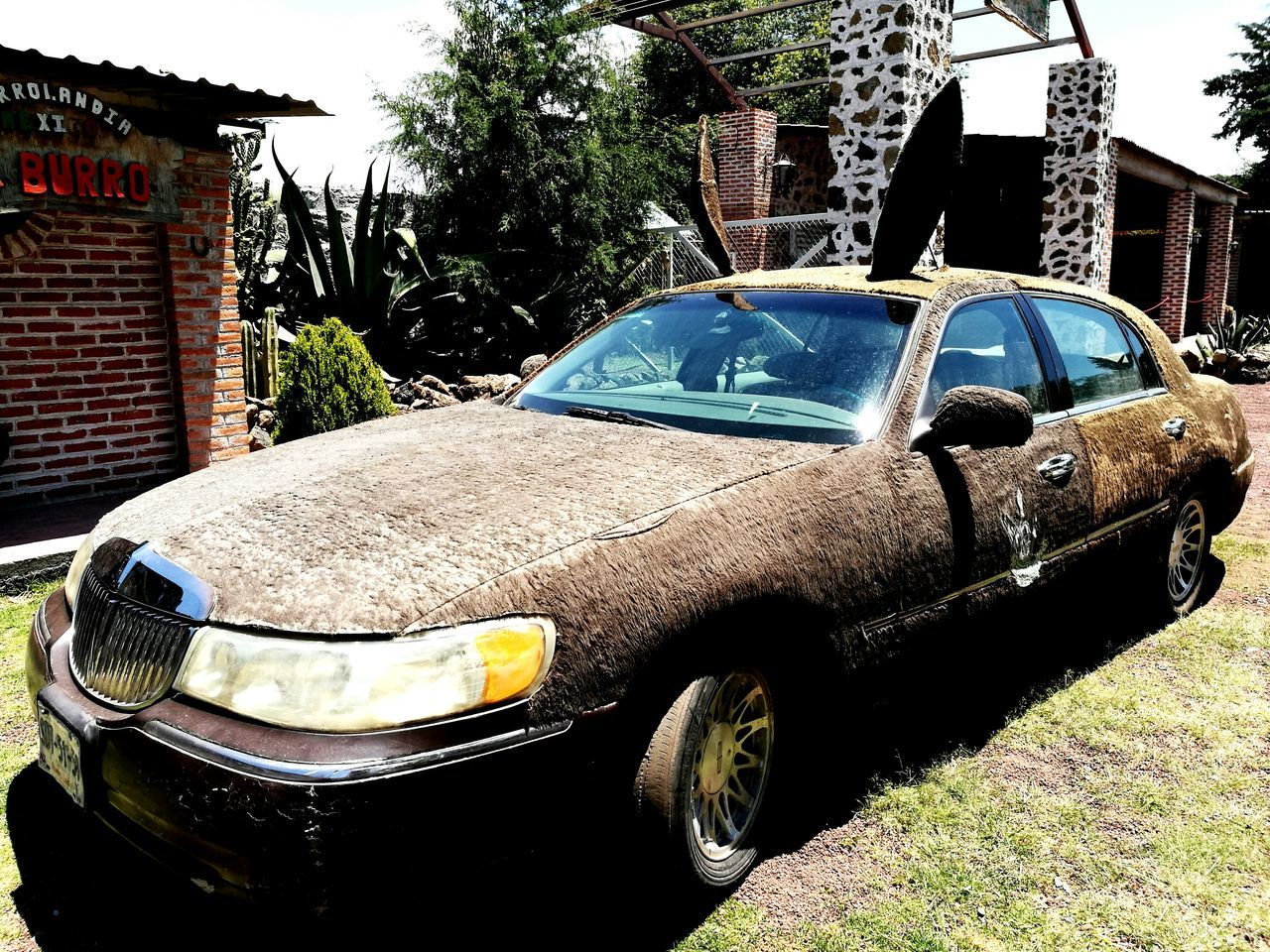 Donkey car, burro auto, otumba, mexico, feria del burro, Donkeyland, Burrolandia