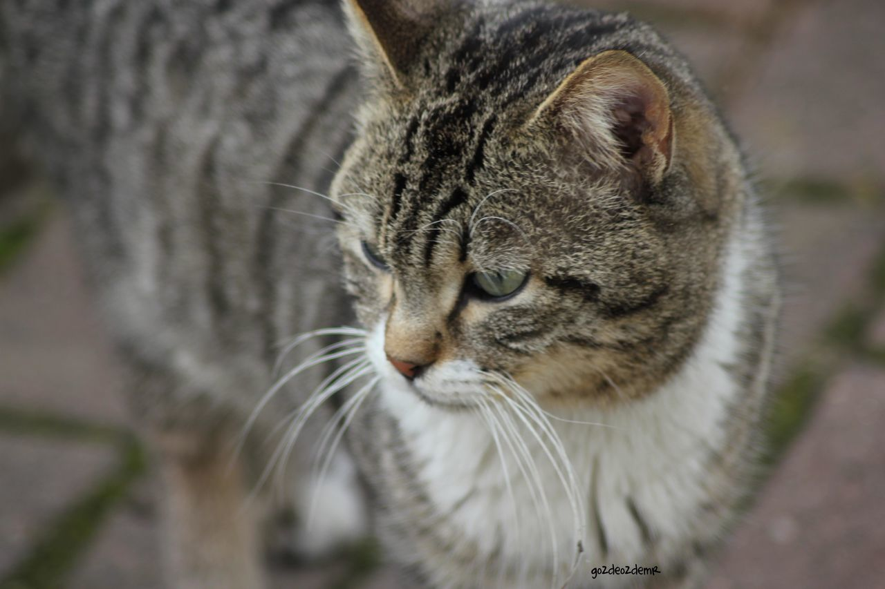 Canon Canonphotography EOS Eos550d 550d Tamron Tamron Lens Tamronlens Tamron70300 Tamron70_300mm Turkey Türkiye Animal Animals Cat Cats Hayvanlar Kediler Animallovers Animallover Nature Natural Doğa Dogal Cat Lovers