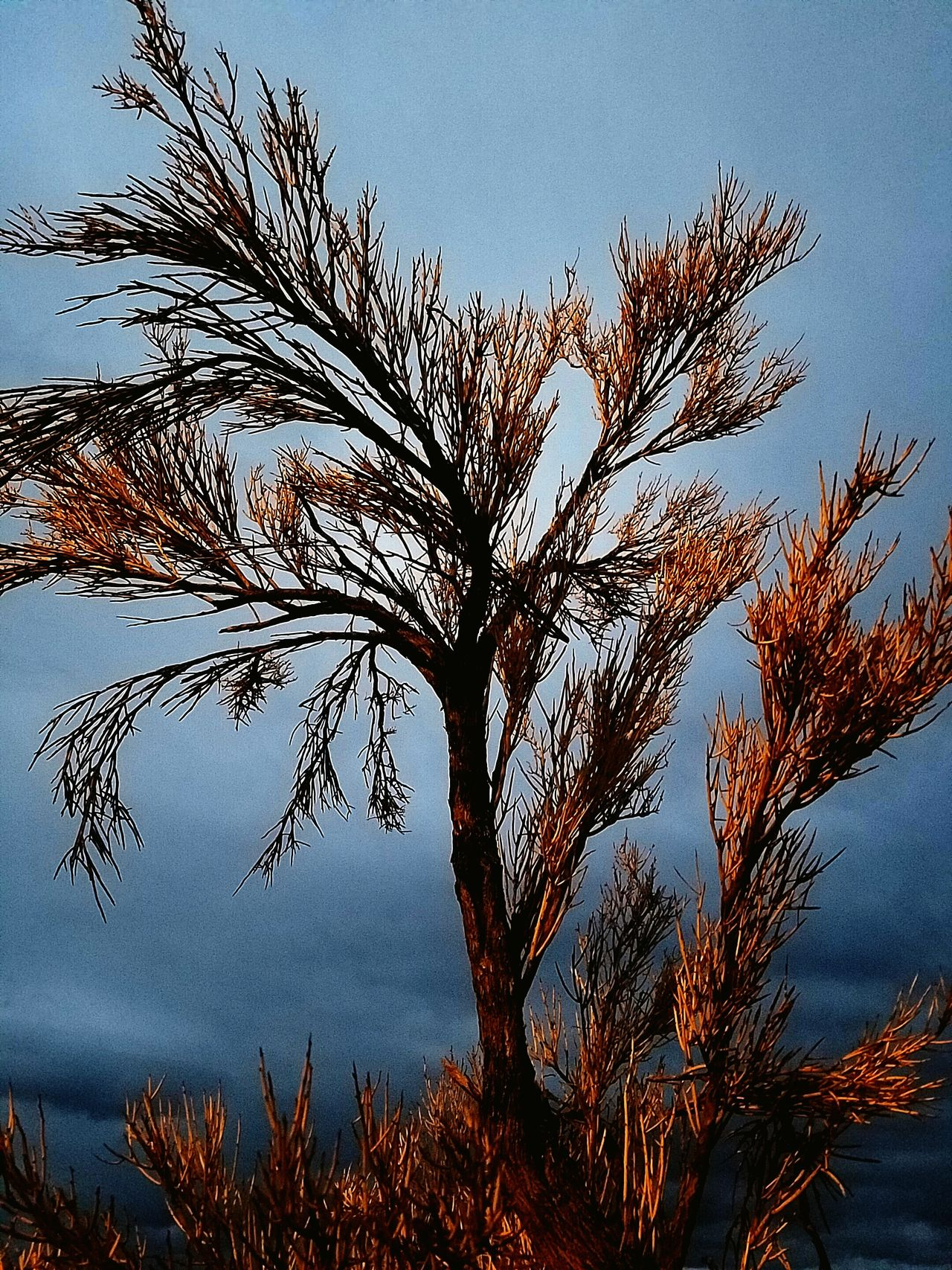 Stopped at a rest stop last night, saw interesting tree. Nature Tree Close-up Sky Dusk Beauty In Nature