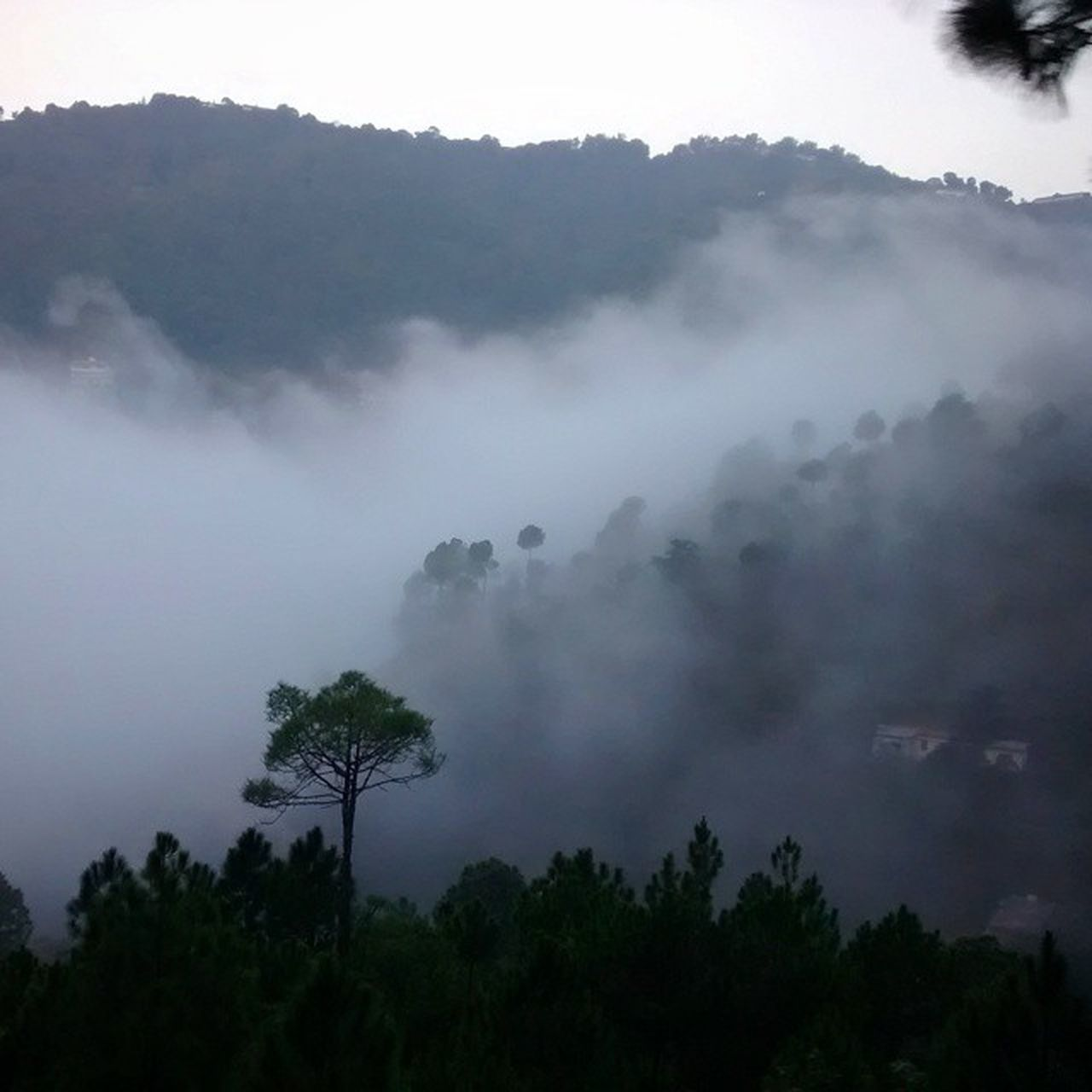 tree, nature, beauty in nature, tranquility, tranquil scene, scenics, outdoors, no people, mountain, landscape, mist, forest, hazy, day, growth, sky, fog
