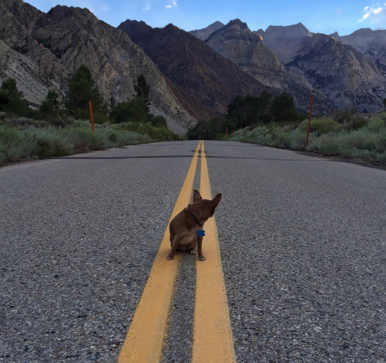 road, mountain, animal themes, one animal, mammal, the way forward, transportation, dog, mountain range, pets, domestic animals, day, outdoors, asphalt, nature, no people