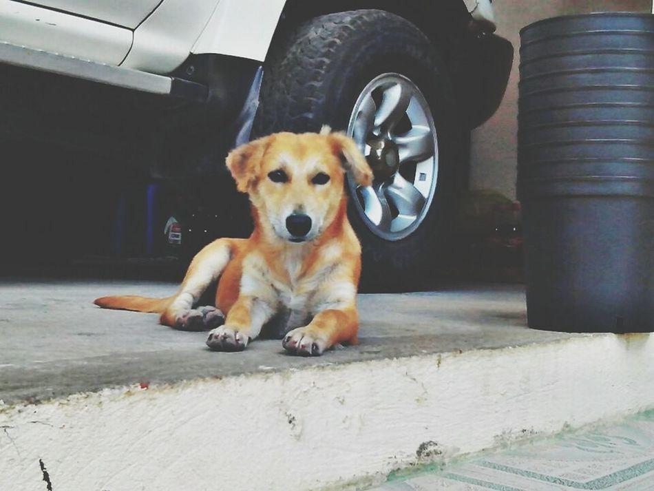Dog Dogs Puppy