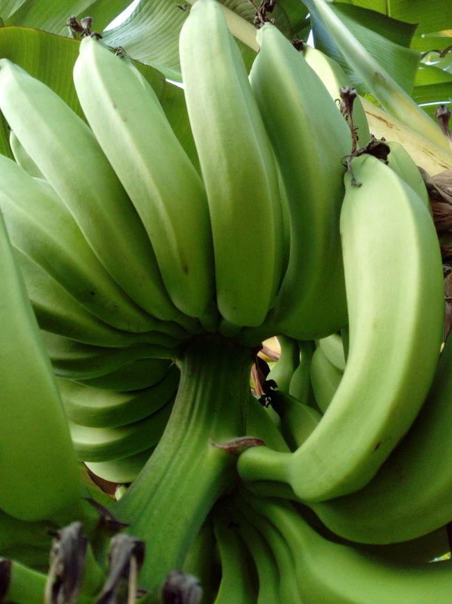 Color Palette Green Bananas Jakarta Indonesia