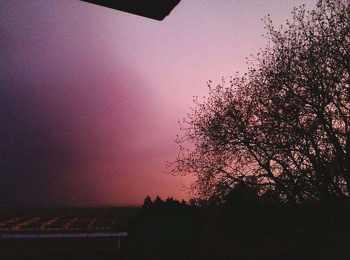 Landleben ,morgens 5:00uhr 🌅 Landleben Sonnenaufgang Frühammorgen Nature Special_shots EyeEm Nature Lover Naturelovers Tree Pink Pinksky