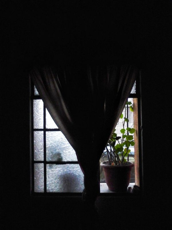 Darkness And Light Dark Photography Dark And Light Dark Houses Green Leaves Leaves Shadow Window Window View Windowporn Inside Looking Out Silhouettes Branches And Leaves Window Reflections Plants Collection Plant Porn Plant Photography Plant Life