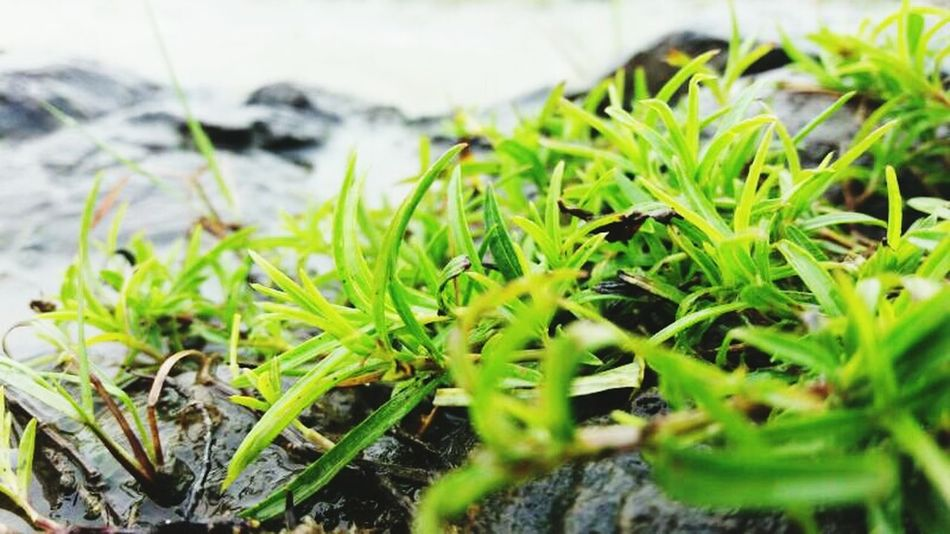Green Color Growth Nature Close-up Plant Outdoors No People Leaf Day Freshness Nature_perfection Beauty In Nature Nature Photography Nature