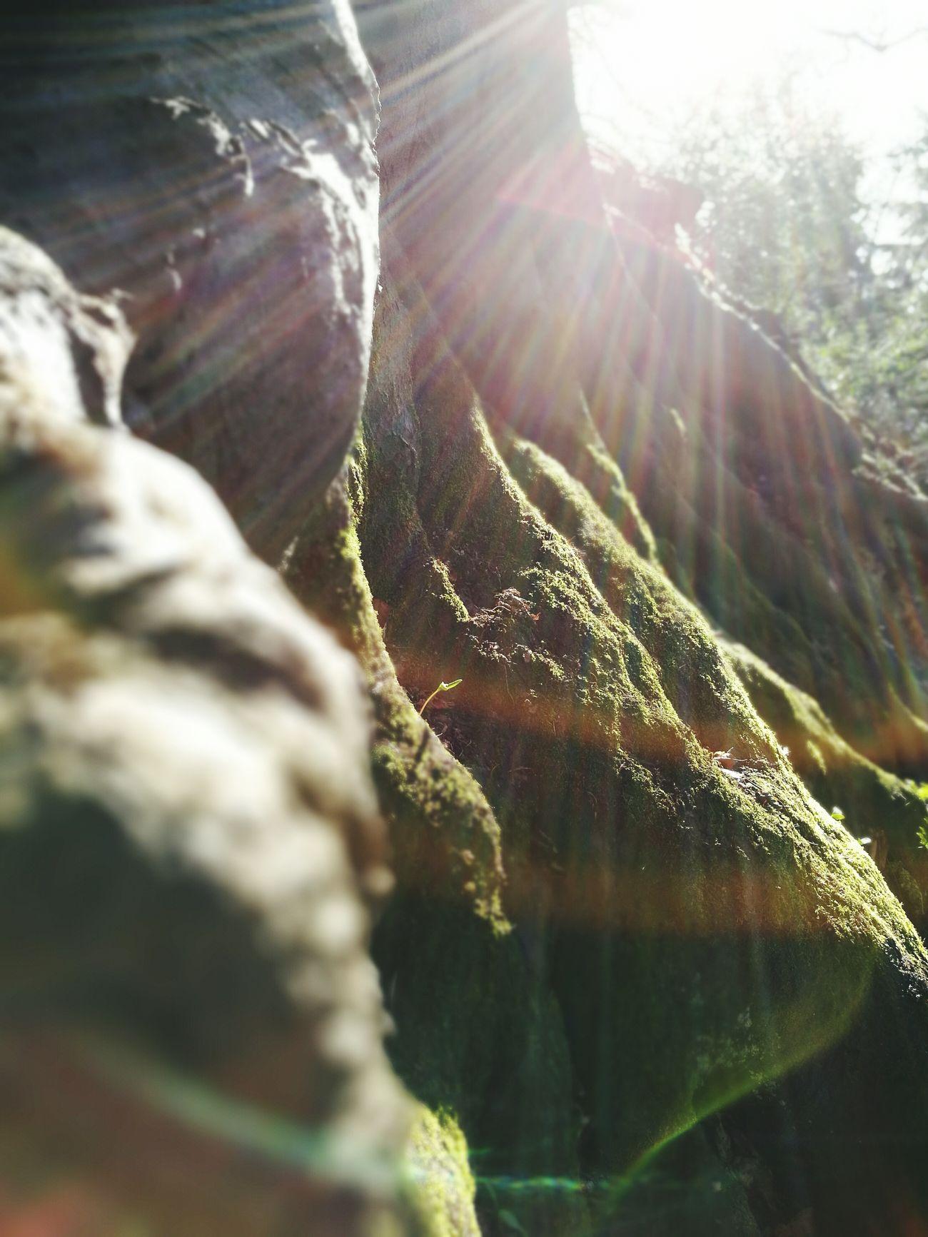 Hanging Out Taking Photos Relaxing Enjoying Life Eye For Photography Nature Huawei P9 Leica Photography Sunlight