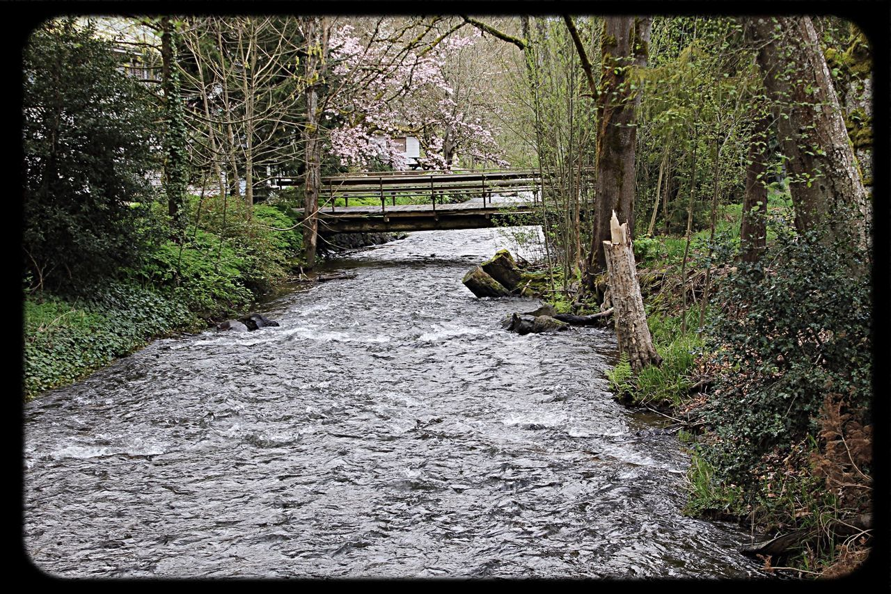 Stream Along Trees With Footbridge In Distance