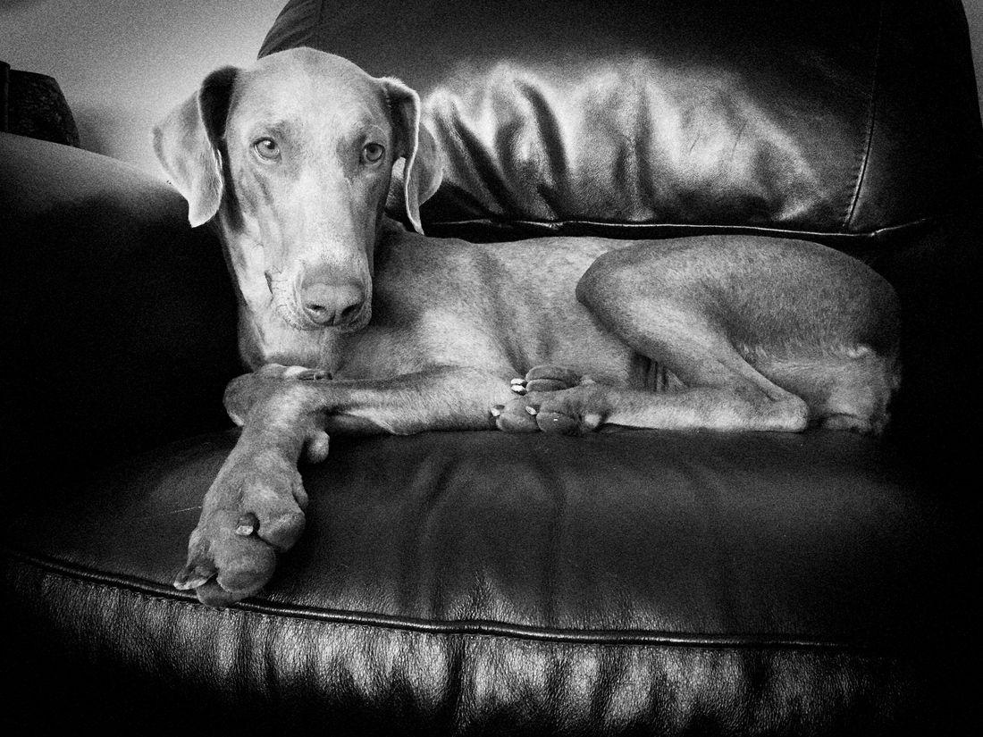 Dog Monochrome Black & White EyeEmBestEdits Eye4photography  Taking Photos EyeEm Best Shots Aldofoto_bw Bw_collection Monoart