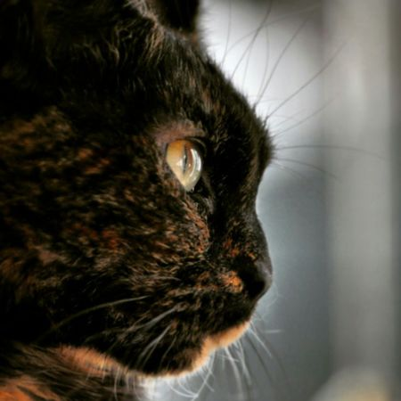 One Animal Animal Themes Close-up Domestic Animals Pets Cat Lovers Catoftheday Cat Watching Tortoiseshell Beautiful Girl Kitty Cat Kittycat Taz
