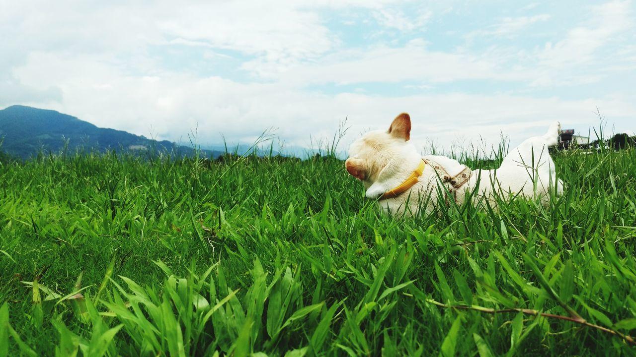 Beautiful stock photos of french bulldog, Adult Animal, Animal Themes, Cloud - Sky, Day