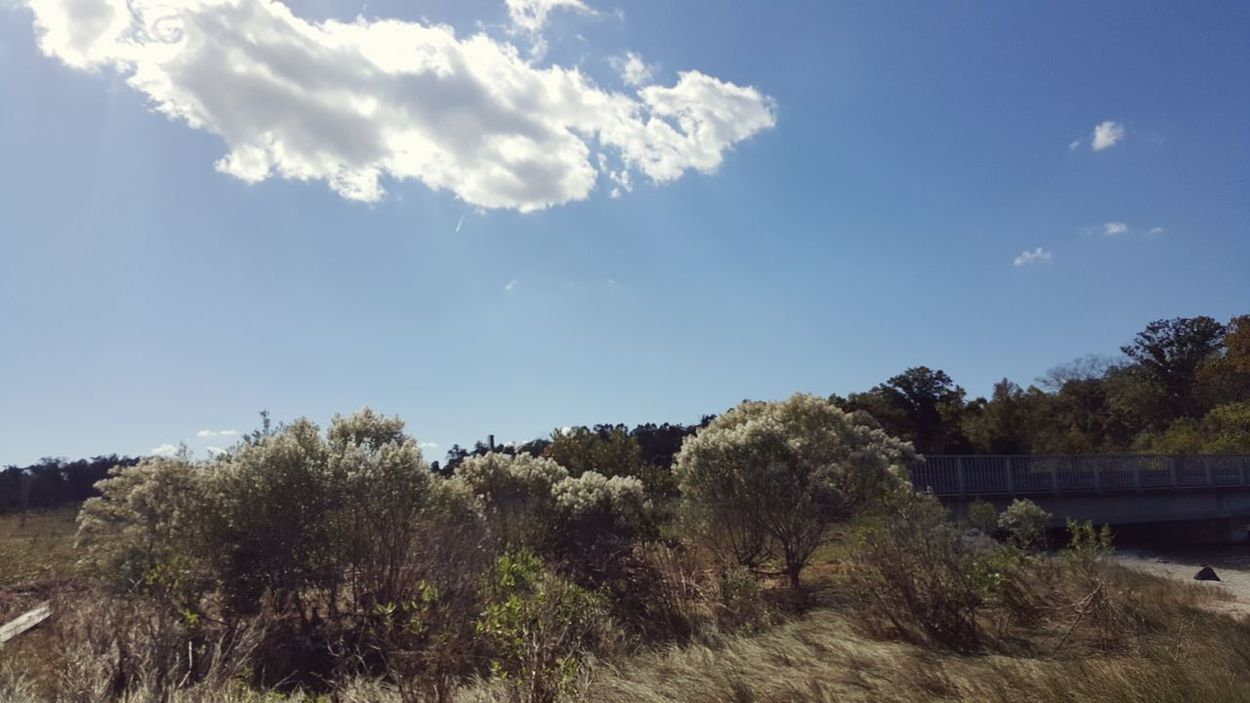 Wetland area Enjoying Life Wetlands Tree And Bushes Bridge Smartphonephotography No People Clouds And Sky Landscape_photography