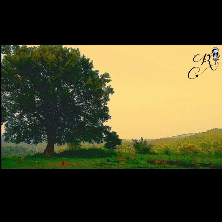Lategram Phone_photography Coorg Nature_love makes_me_happyclickeditpostinstalikelike_if_liked