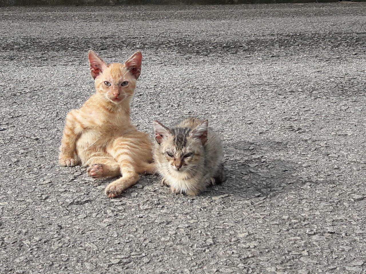 Beautiful stock photos of baby katzen, pets, domestic animals, animal themes, mammal