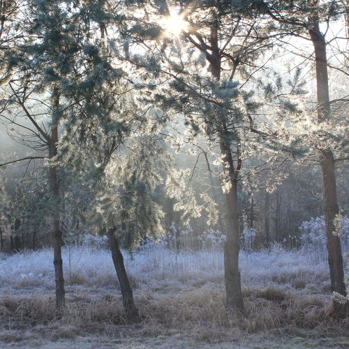 Beauty In Nature Branch Cold Day Day Forest Freshness Frost Growth Nature No People Outdoors Poland Sunshine Tree Winter Winter Tones
