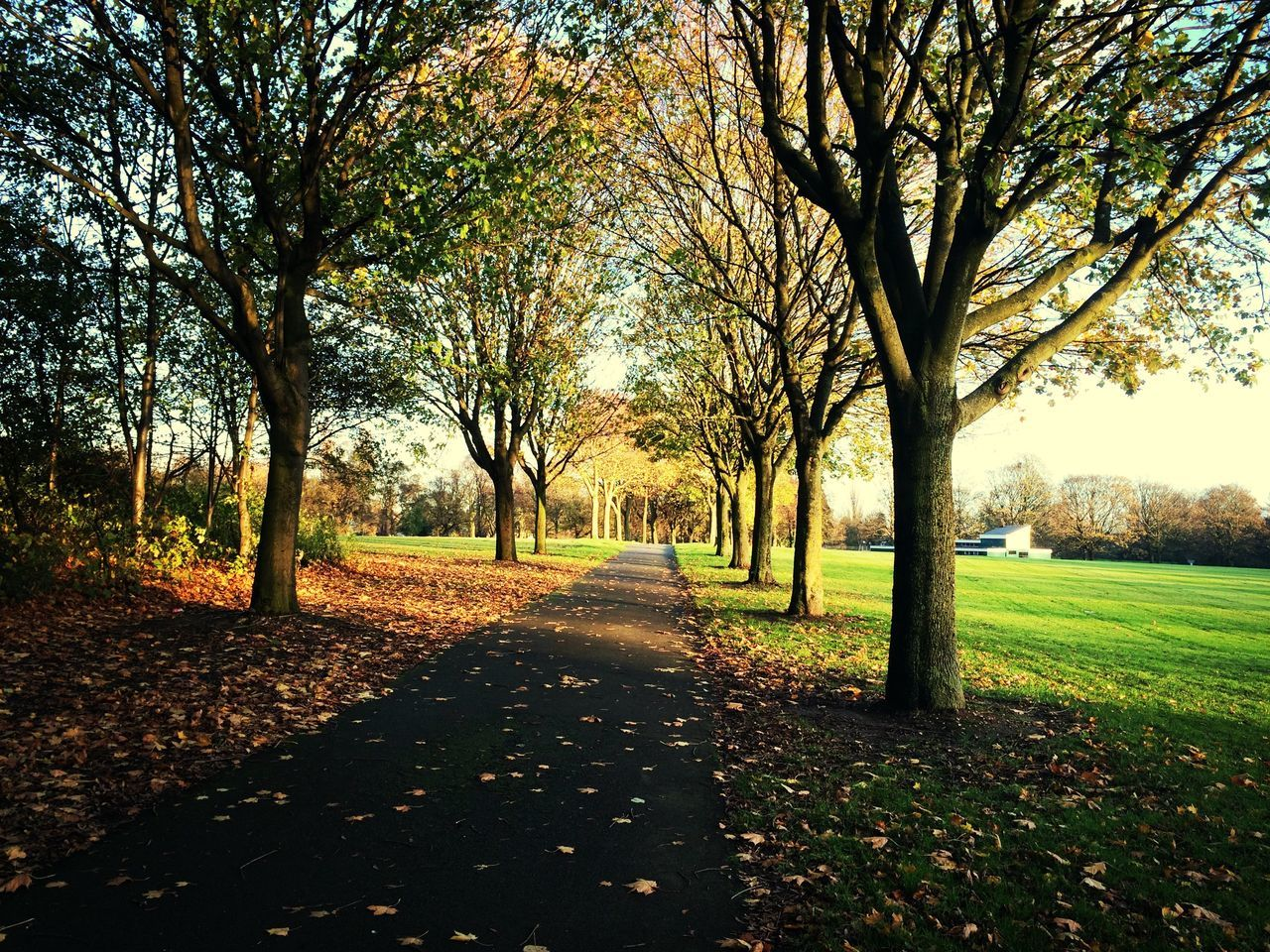 tree, nature, scenics, tranquility, tranquil scene, diminishing perspective, landscape, the way forward, beauty in nature, autumn, outdoors, road, day, field, no people, grass, branch, sky