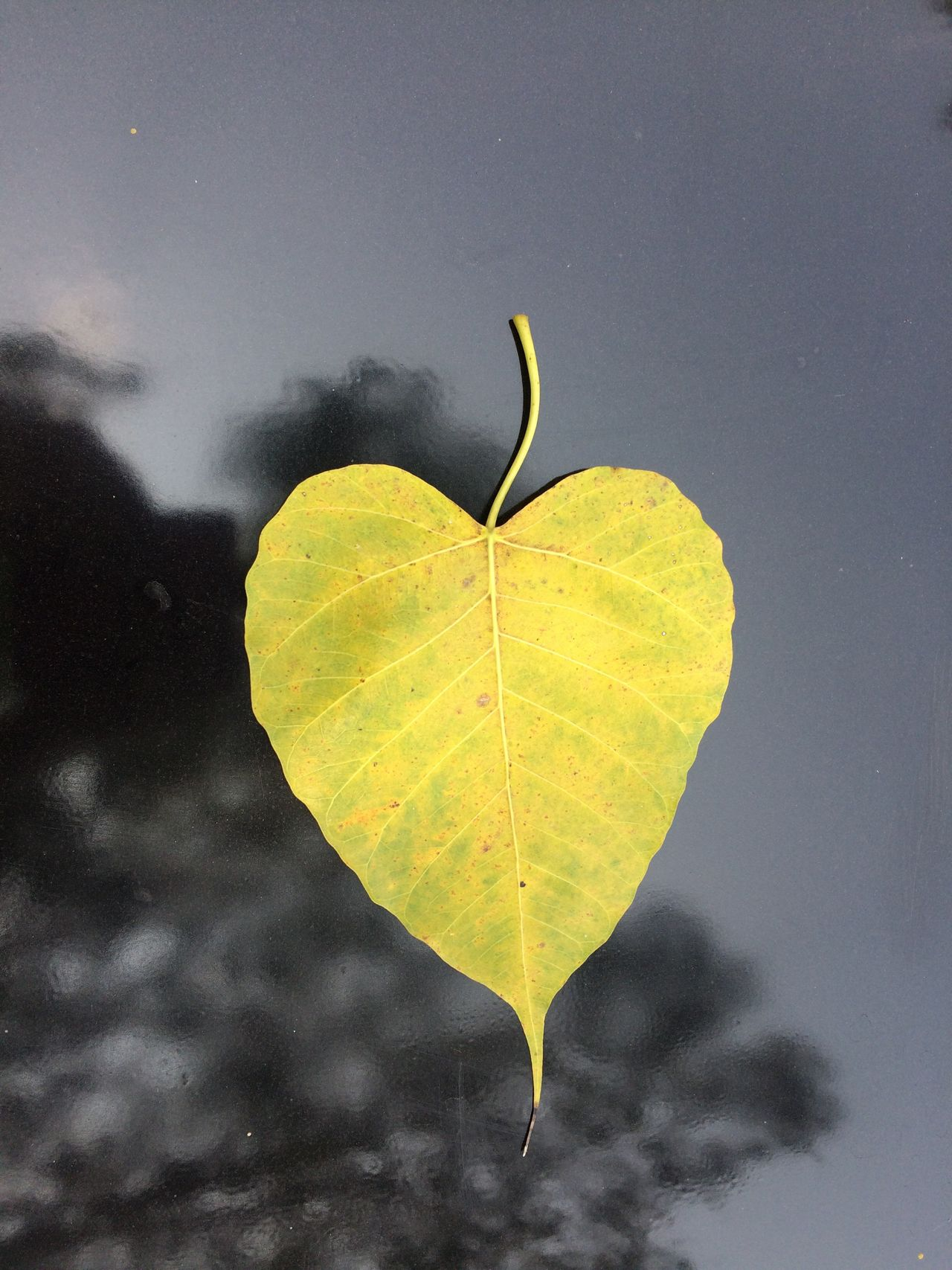 Yellow Nature No People Water Fragility Outdoors Leaf Close-up Beauty In Nature Day Sky Golden Leaf Heart Shape