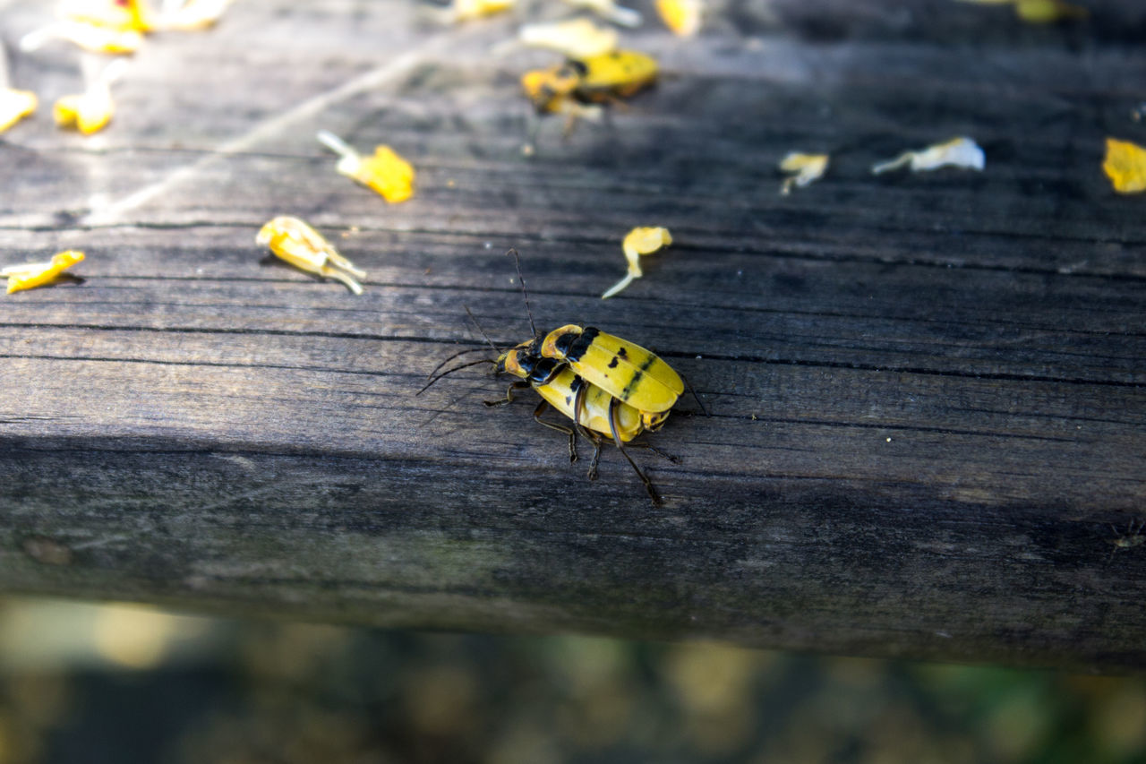 insect, animals in the wild, yellow, animal themes, one animal, close-up, day, outdoors, no people, nature, fragility, ladybug
