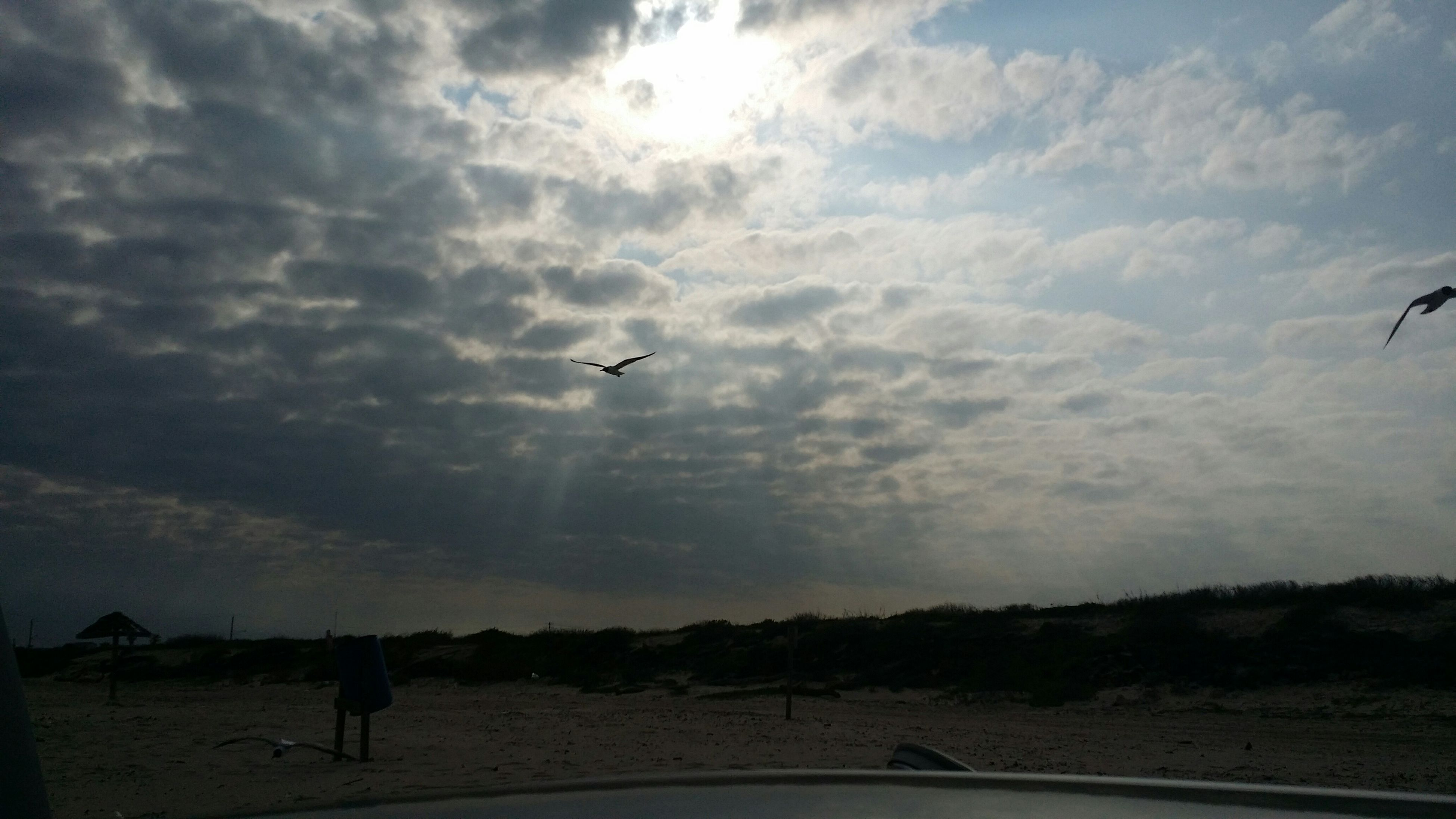 flying, sky, transportation, cloud - sky, silhouette, animal themes, bird, mid-air, airplane, mode of transport, cloud, nature, cloudy, on the move, one animal, beauty in nature, scenics, sunset, sunlight, sun