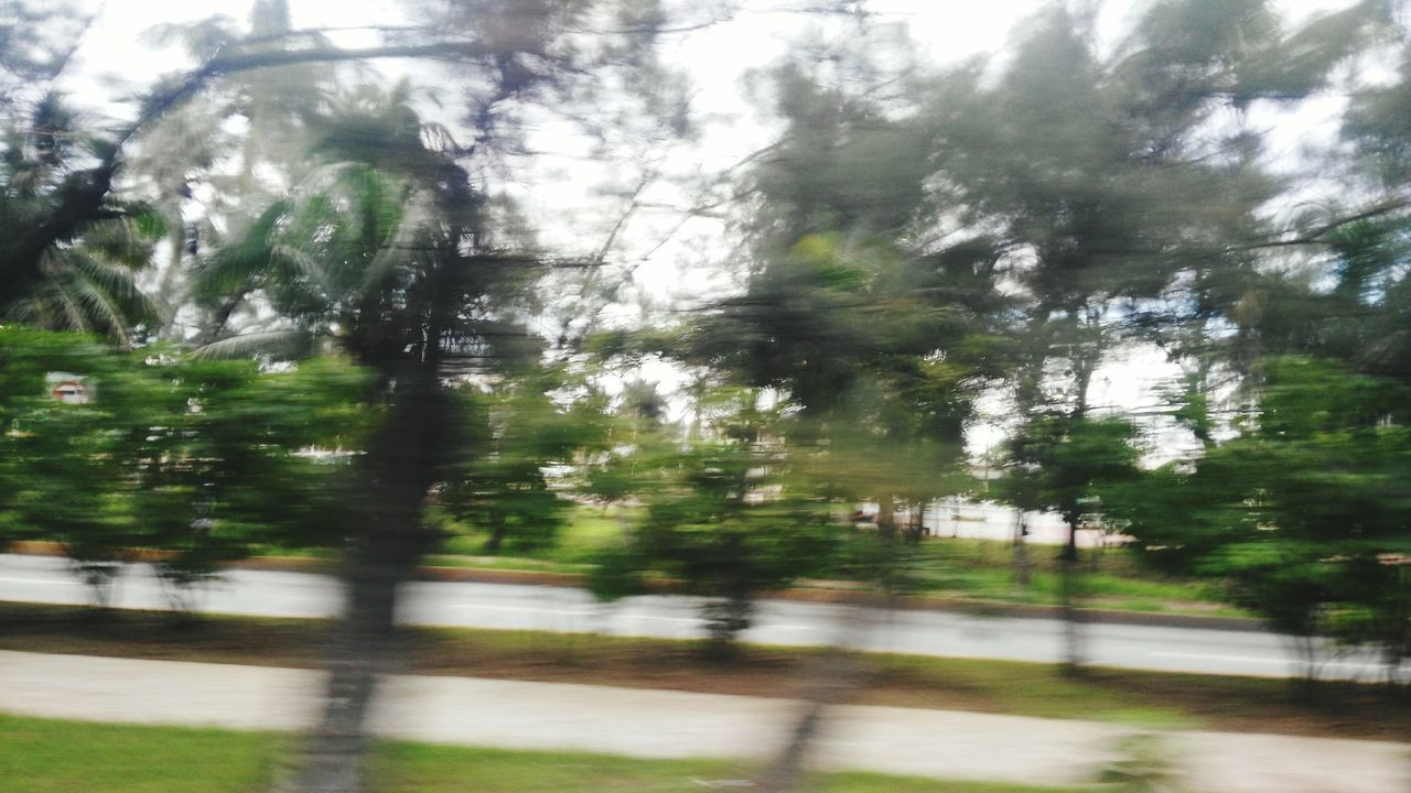 The Flash... Tree Nature Reflection Forest Green Color EyeEm Gallery Taking Photos Huaweig7 Blurred Visions Speedway
